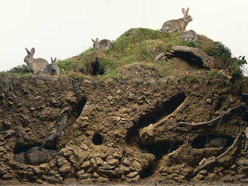 Extrêmement Grattage et creusement - La cuniculture du bosquet OK51